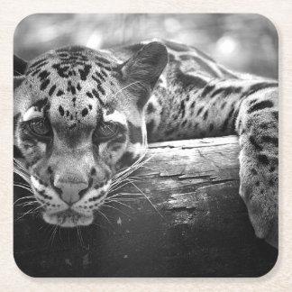 Clouded Leopard Cat coaster