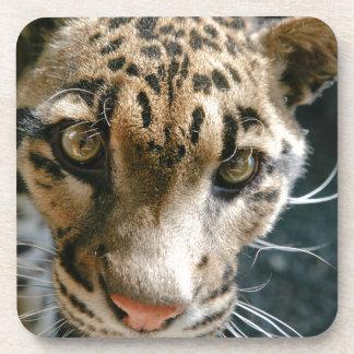 Clouded Leopard Beverage Coaster