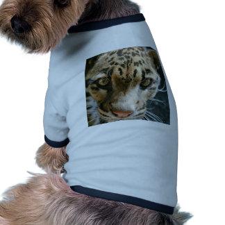 Clouded Leopard Pet Tee Shirt