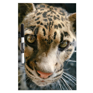 Clouded Leopard Dry-Erase Boards