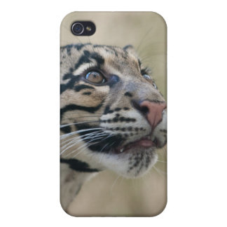 Clouded Leopard iPhone 4 Cases