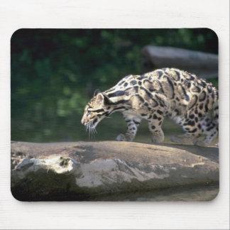 Clouded leopard mouse pads