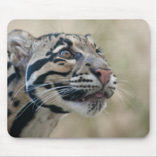 Clouded leopard mouse pad