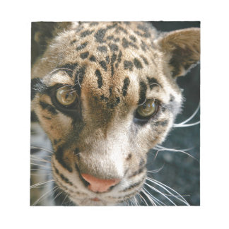 Clouded Leopard Memo Note Pad