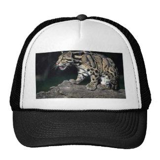 Clouded leopard on log mesh hat