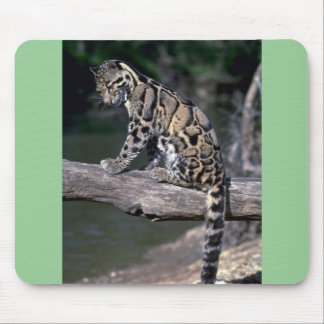 Clouded leopard on log mouse pad
