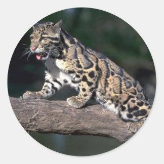 Clouded leopard on log sticker