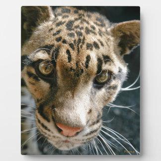 Clouded Leopard Plaque