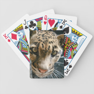 Clouded Leopard Bicycle Playing Cards