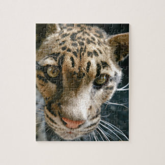 Clouded Leopard Jigsaw Puzzle