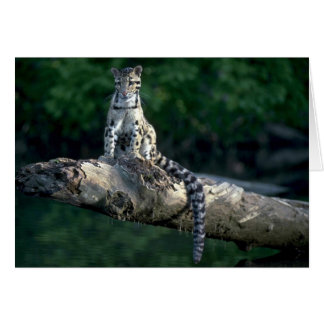 Clouded leopard sitting on log over river greeting cards