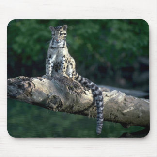 Clouded leopard sitting on log over river mouse pad