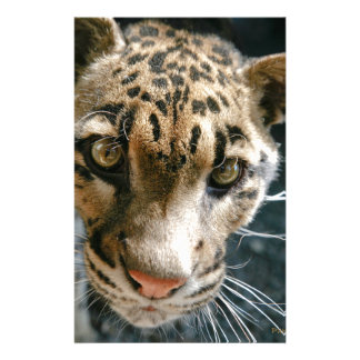 Clouded Leopard Stationery Paper