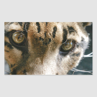 Clouded Leopard Rectangle Sticker