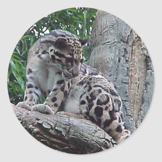 Clouded Leopard Round Stickers