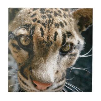 Clouded Leopard Tile