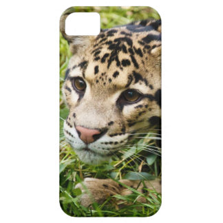 clouded leopard waiting for mom and love iPhone 5 covers
