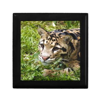 clouded leopard waiting for mom and love jewelry boxes