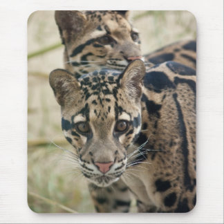 Clouded leopards mouse pad