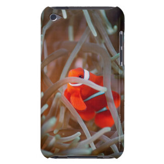 Clown anemonefish 2 barely there iPod cases