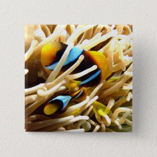 Clown Fish 15 Cm Square Badge