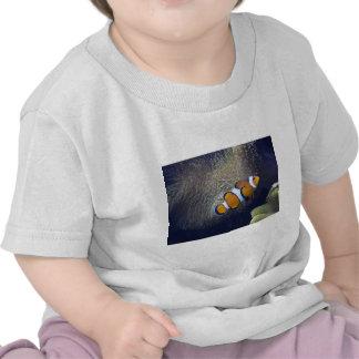 clown fish 2 tee shirt