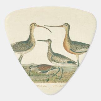 Coastal Antique Birds Audubon Marsh Guitar Pick