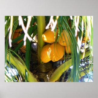 Coconuts Yellow Orange Poster