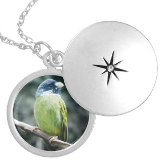 Collared Finch-Billed Bulbul Personalized Necklace