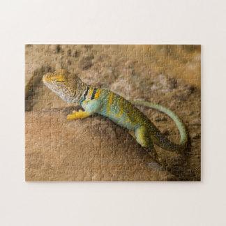 Collared Lizard Jigsaw Puzzle