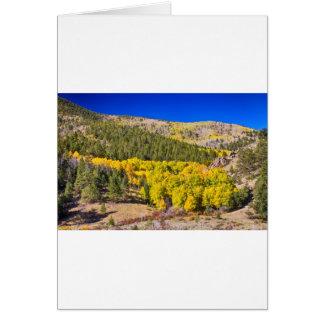 Colorado Gold Blue Card