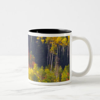 Colorful aspens in Logan Canyon Utah in the Two-Tone Coffee Mug