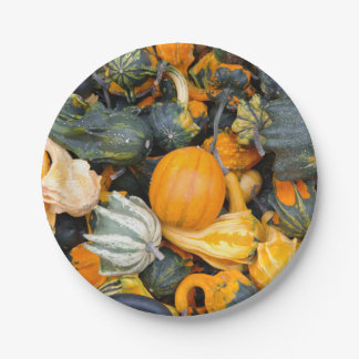 Colorful Autumn Gourds and Squash Paper Plate