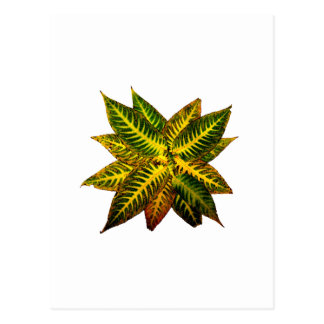 Colorful Autumn Leaves Pinwheel Postcard