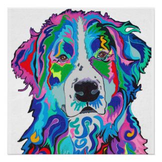 Colorful Bernese Poster