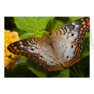 Colorful Butterfly Blank Notecard Note Card