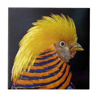 Colorful golden pheasant print small square tile