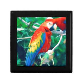 Colorful Macaw Gift Box