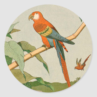 Colorful Orange and Brown Parrot on Bamboo Round Sticker