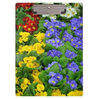 Colorful primrose flowers clipboard