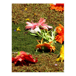 Colorful scenery of forgotten flowers postcard