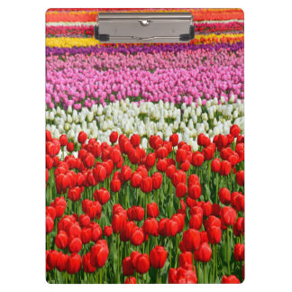 Colorful spring tulips print clipboard