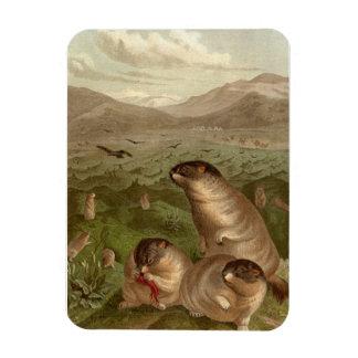 Colorful vintage marmot illustration magnet