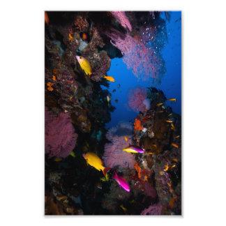Colourful Coral Sea Photo Print