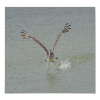 Coming in for a Landing Pelican Canvas Print