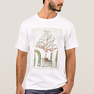Common asparagus in flower and fruit, from the 'Ho T-Shirt