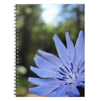 Common Chicory Spiral Photo Notebook