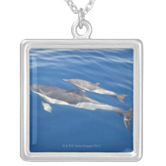 Common Dolphin Silver Plated Necklace