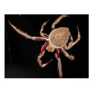 Common Garden Spider Postcard