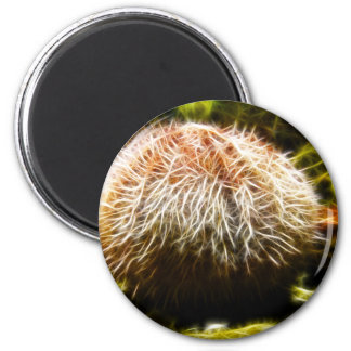 Common Sea Urchin 6 Cm Round Magnet